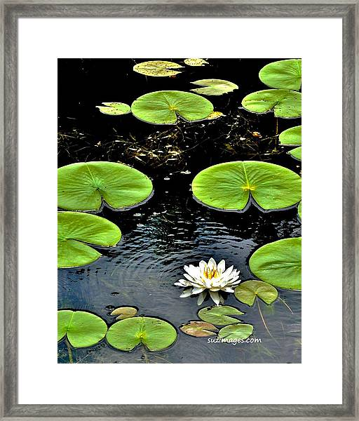 Floating Lily Framed Print