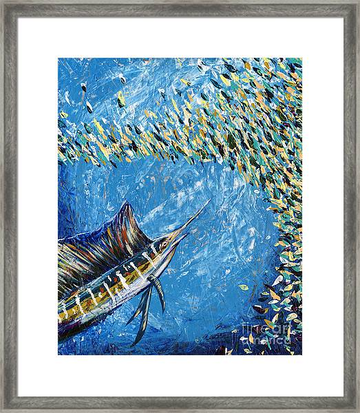 Sailfish Lunch Framed Print