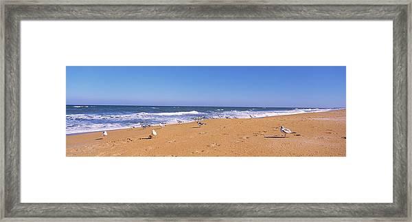 Flock Of Birds On The Beach, Flagler Framed Print