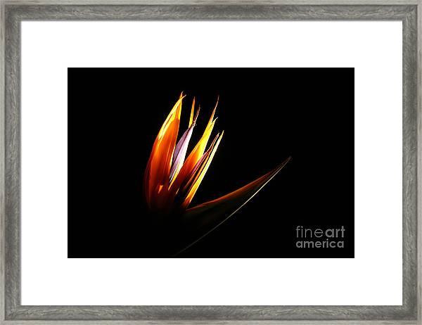 Flor Encendida Detalle Framed Print