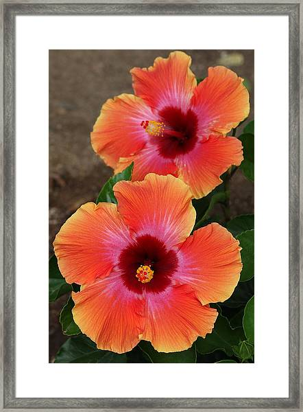 Floral Beauty 2  Framed Print
