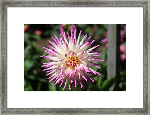 Floral Beauty 3  Framed Print
