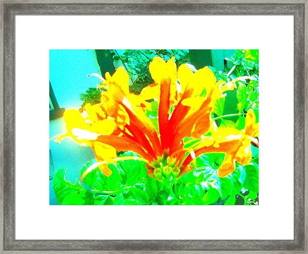 Floral Framed Print by Dan Twyman