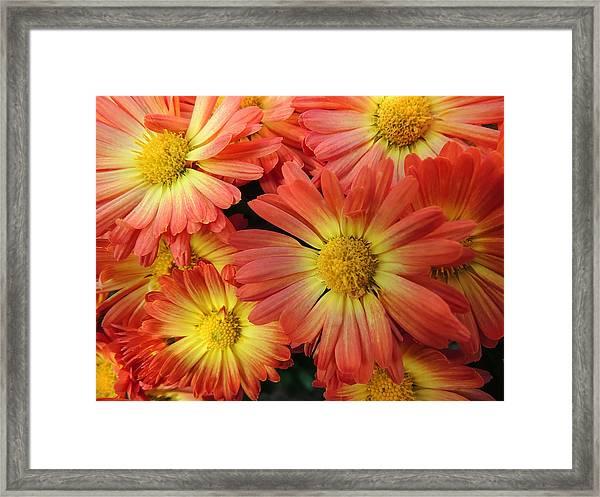 Floral Frenzy 2 Framed Print