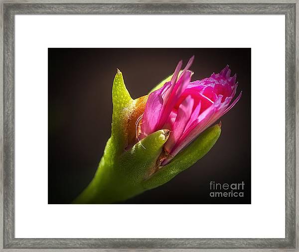 Floral Glove Framed Print