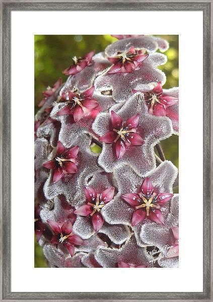 Floral Presence - Signed Framed Print