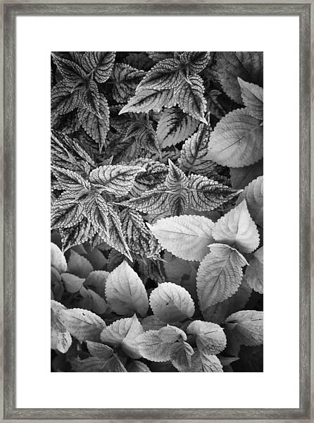 Floral Tones At Biltmore Framed Print