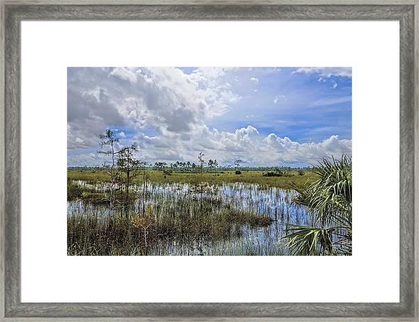 Florida Everglades 0173 Framed Print