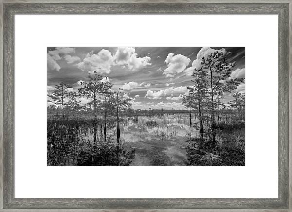 Florida Everglades 5210bw Framed Print
