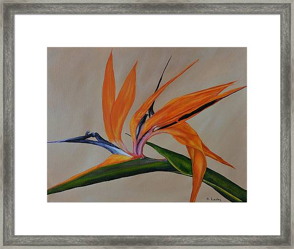 Florida Orange Bird Framed Print