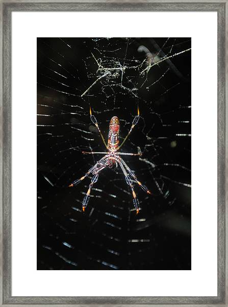 Insect Me Closely Framed Print