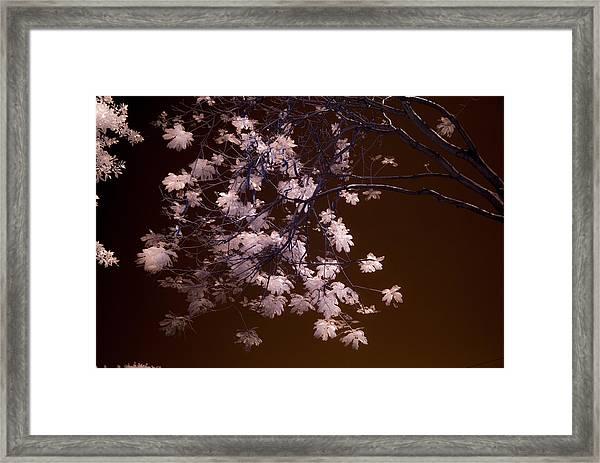 Florida Spring Framed Print