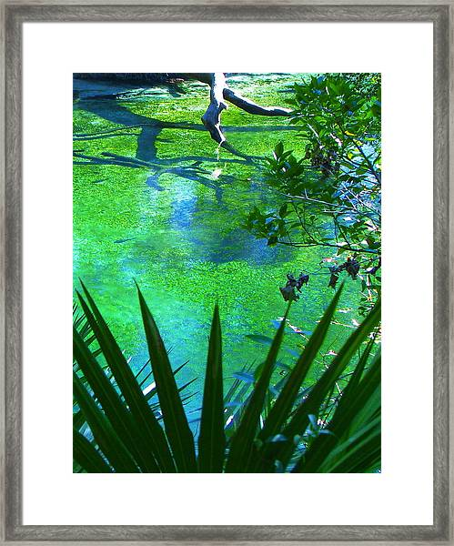 Florida Swamp With Driftwood Framed Print