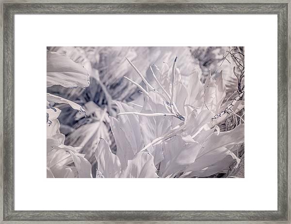 Florida Whites Framed Print