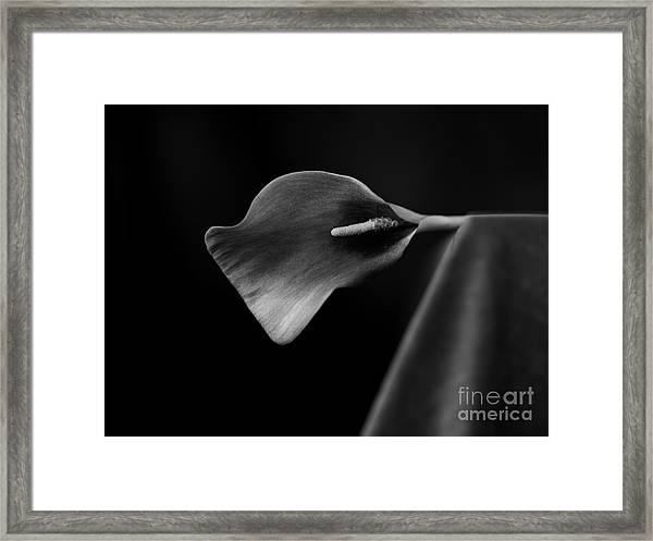 Flower #305 Framed Print