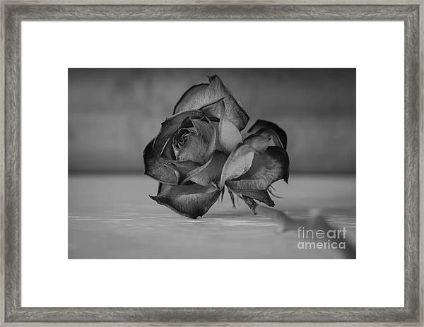 Flower #609 Framed Print