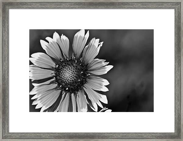 Flower Black And White #1 Framed Print