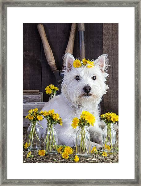 Framed Print featuring the photograph Flower Child by Edward Fielding