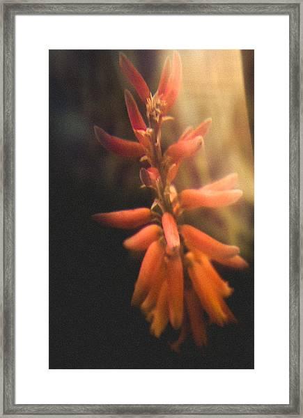 Flower Crackers  Framed Print