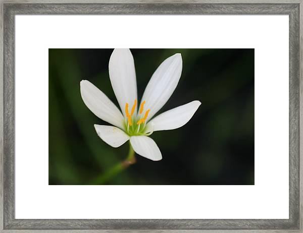 Flower Framed Print by Debbie Cundy