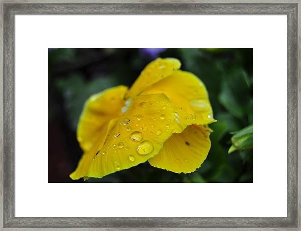 Flower Droplets Framed Print