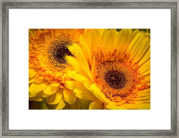 Flower Eyes Framed Print