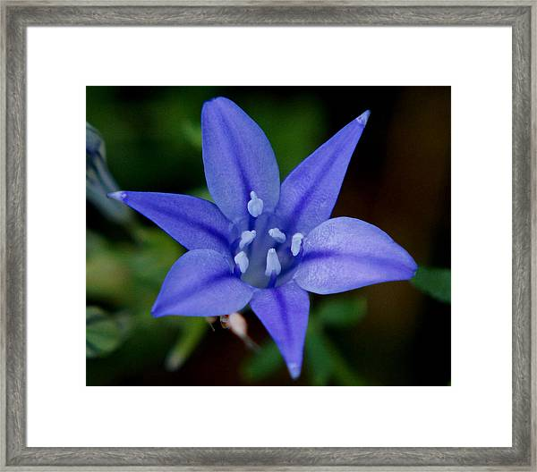 Flower From Paradise Lost Framed Print