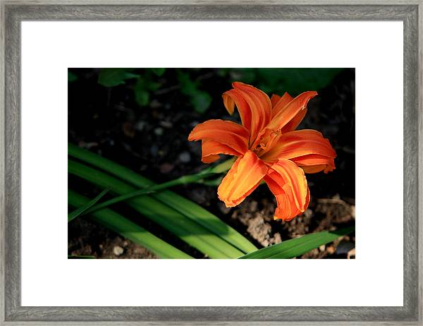 Flower In Backyard Framed Print