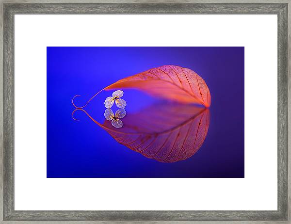 Flower In Heaven Framed Print