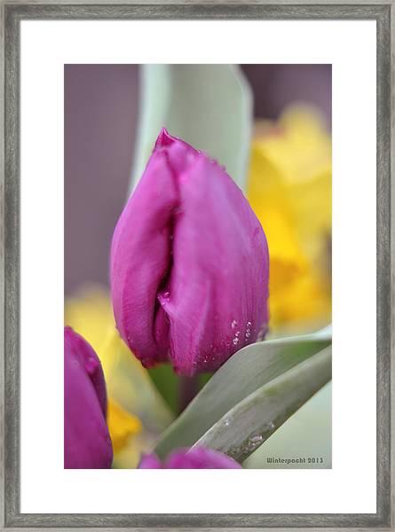 Flower In The Spring Framed Print