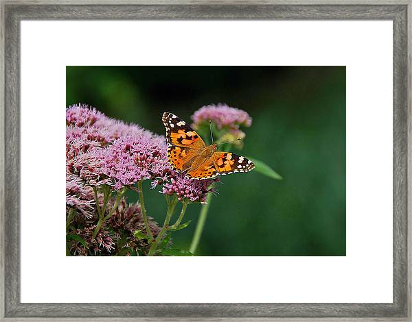 Flower Kissed By Butterfly Framed Print by Judith Russell-Tooth
