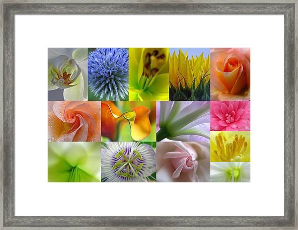 Flower Macro Photography Framed Print