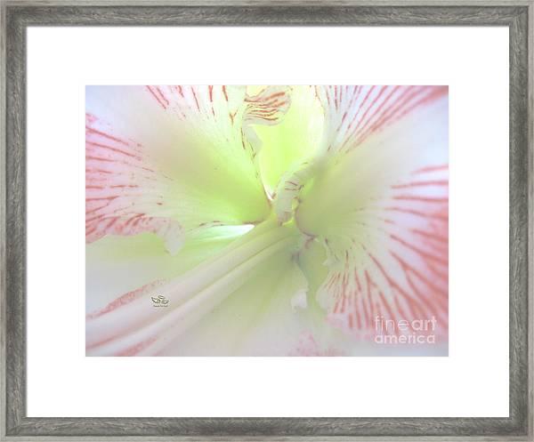 Flower Of Light Framed Print