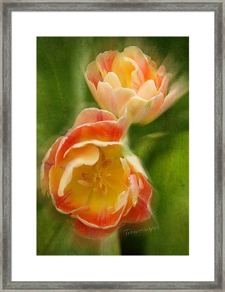 Flower Power Revisited Framed Print