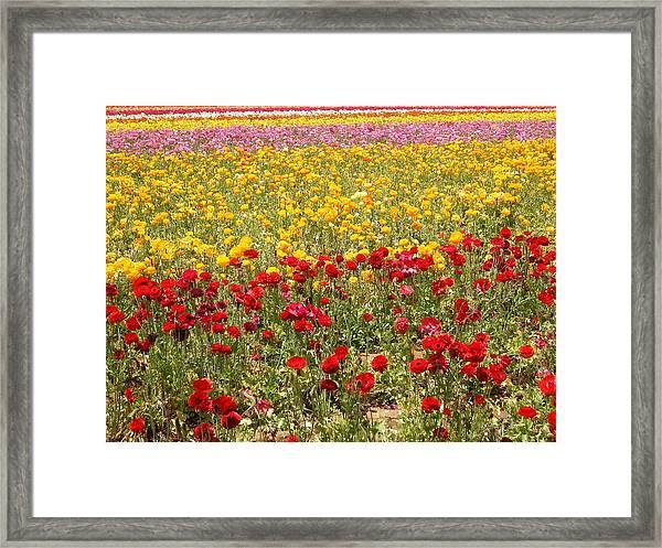 Flower Rainbow Framed Print