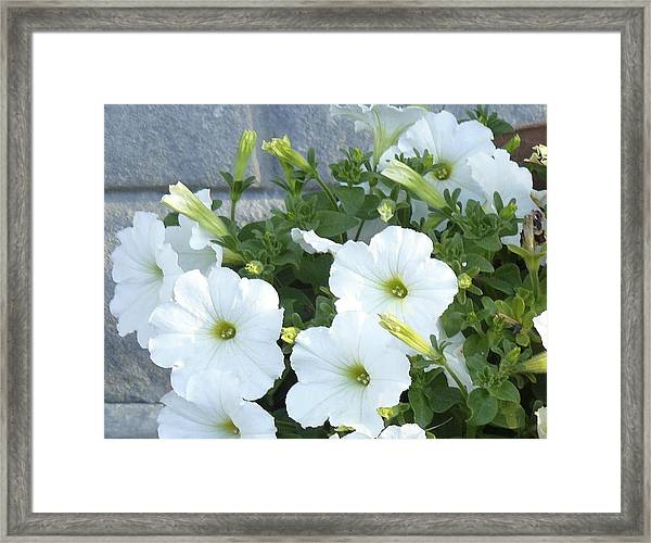 Flower Trios A Framed Print