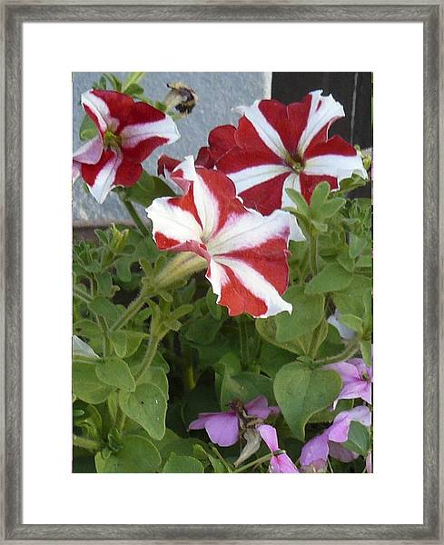 Flower Trios B Framed Print
