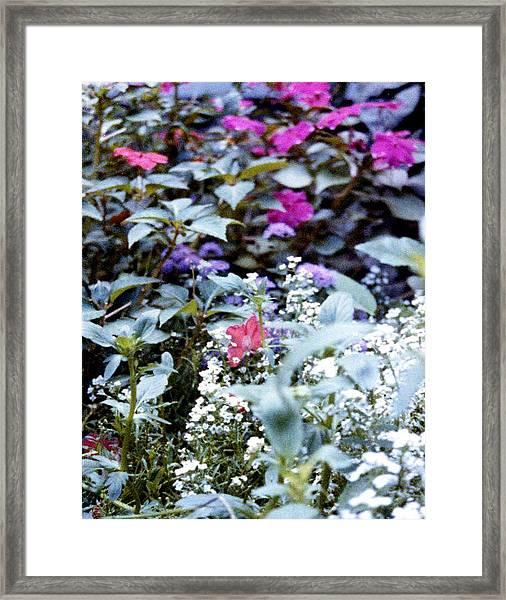 Flower Variety Garden Framed Print