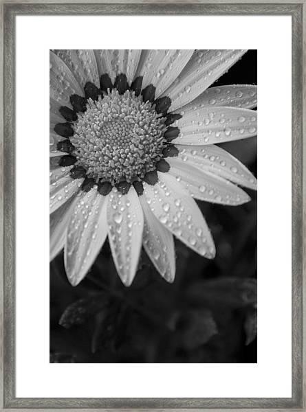 Flower Water Droplets Framed Print