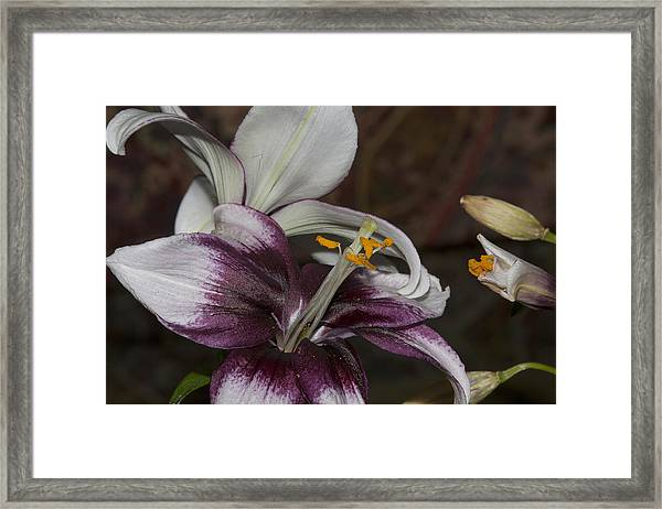Flower1 Framed Print