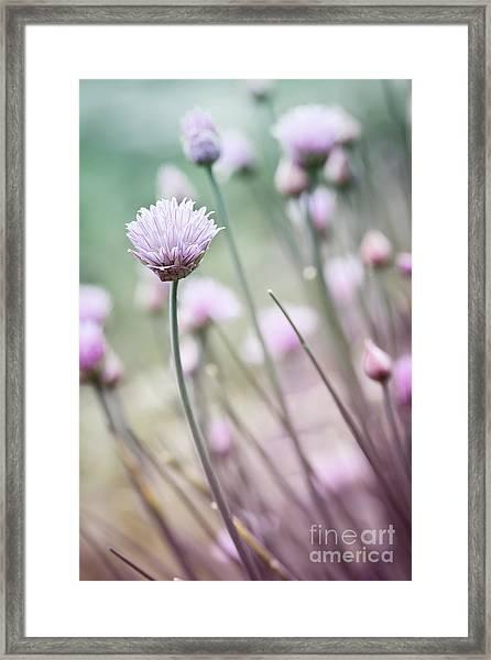 Flowering Chives I Framed Print