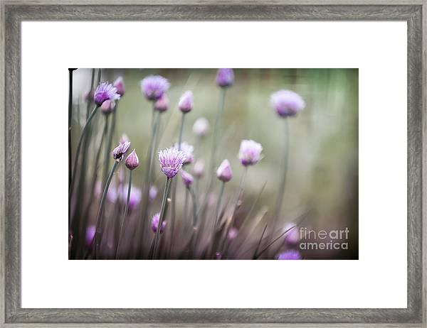 Flowering Chives II Framed Print