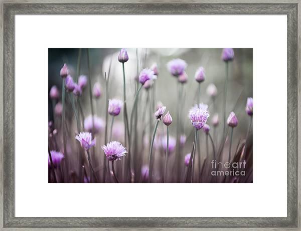 Flowering Chives Iv Framed Print