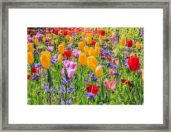 Flowers Everywhere Framed Print