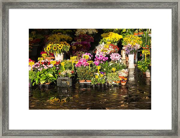 Flowers For Sale At Campo De Fiori - My Favourite Market In Rome Italy Framed Print