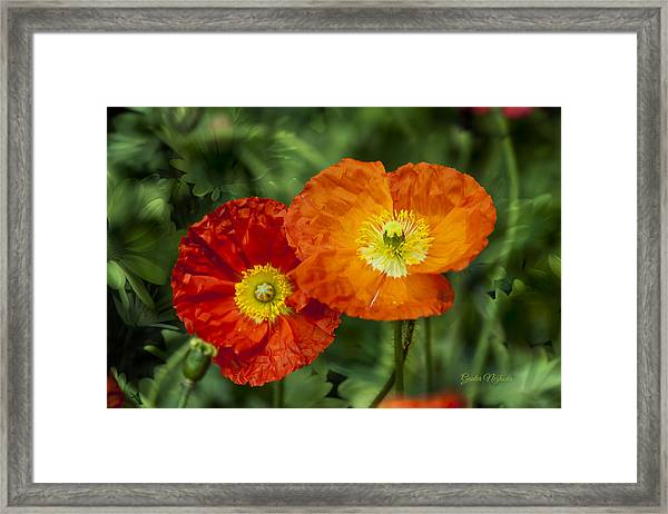Flowers In Kodakchrome Framed Print