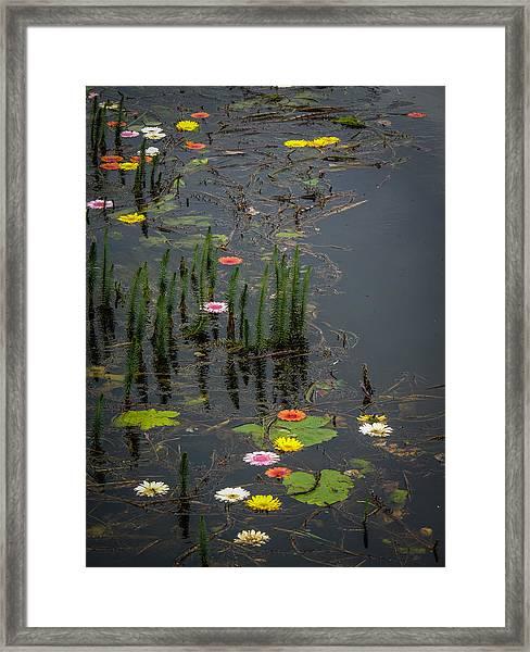 Flowers In The Markree Castle Moat Framed Print