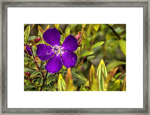 Flowers Love Water Framed Print