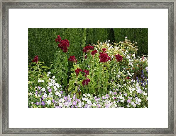 Flowers Of Alhambra Framed Print