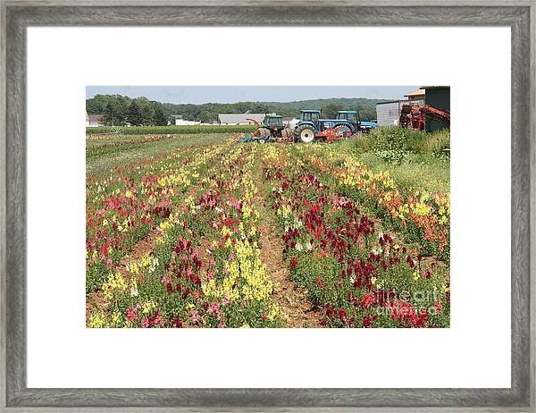 Flowers On The Farm-1 Framed Print